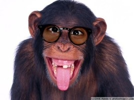 monkey glasses
